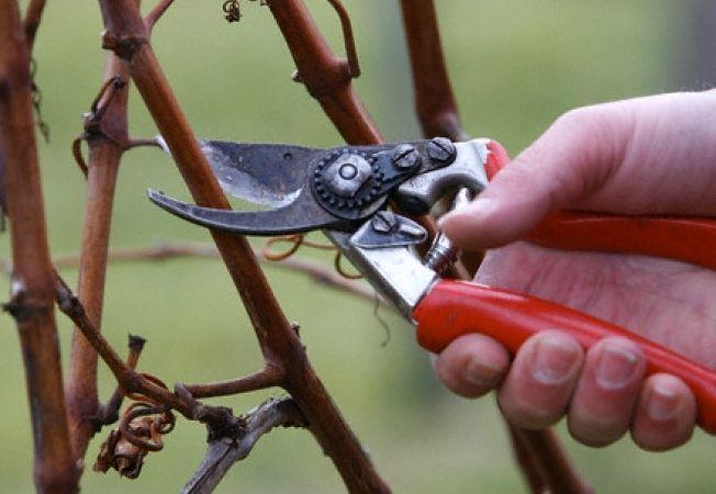 Invata sa tunzi corect pomii pe timp de iarna