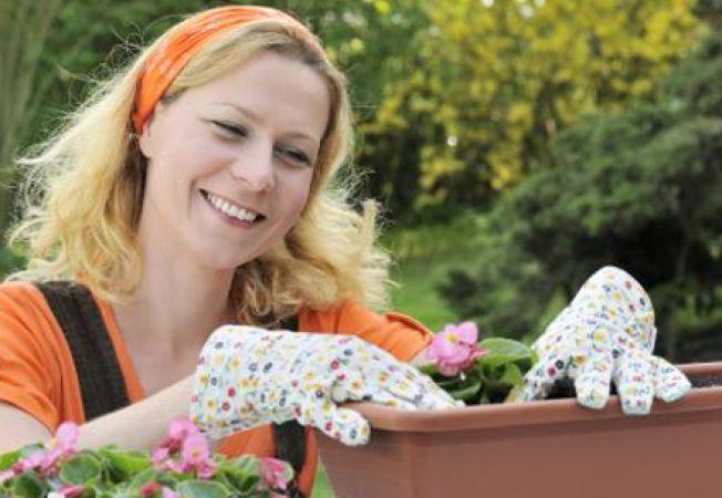 Tu stii care sunt atributele unui ghiveci bun pentru plante?
