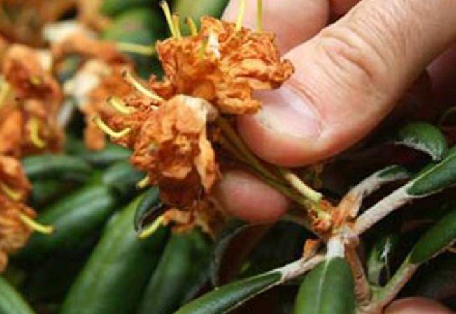 Ce trebuie sa stii despre taierea florilor uscate