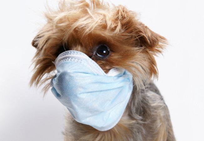 Pneumonia canina, o boala care iti poate afecta cel mai bun prieten