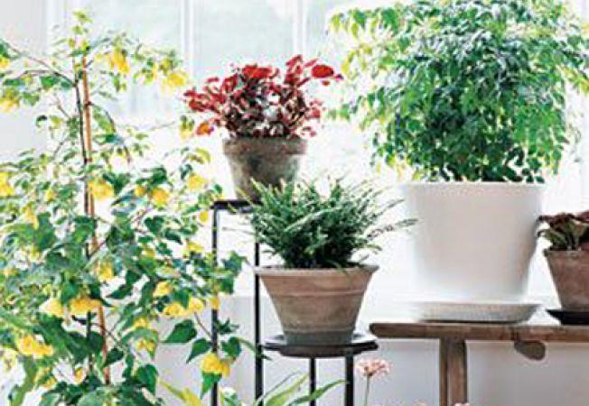 Ce plante de ghiveci poti creste in sezonul rece