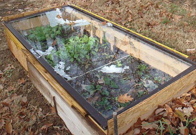 Rasadnitele, o solutie pentru plantele tale in sezonul rece