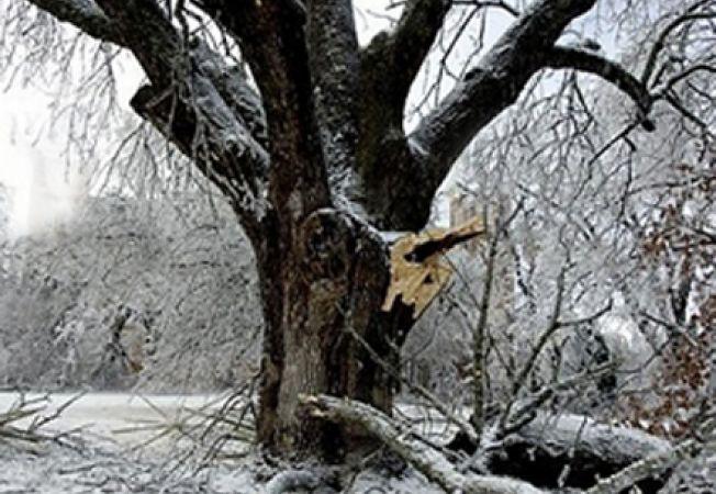 Solutii pentru remedierea distrugerilor din gradina cauzate de vremea rea