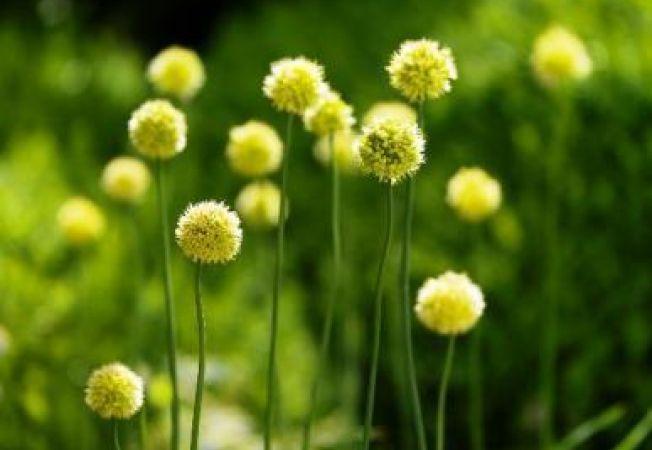 5 plante pe care sa le plantezi toamna pentru o gradina frumoasa sezonul viitor