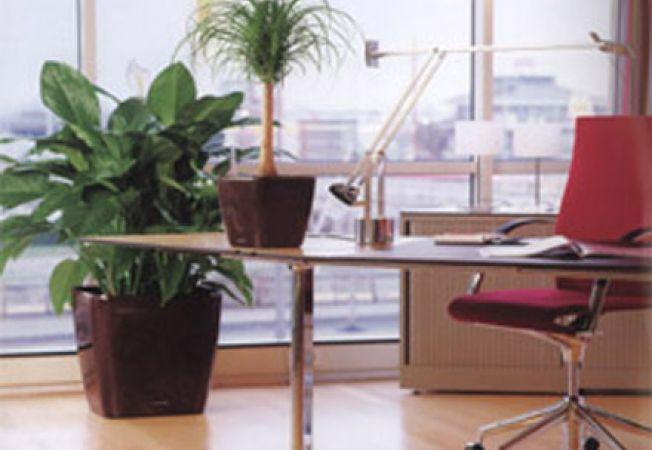 Ce trebuie sa stii cand alegi planta de birou