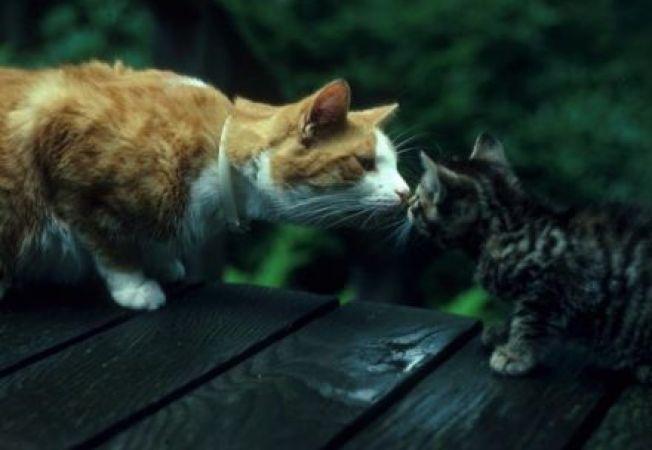 4 trucuri eficiente pentru a integra o pisica noua in caminul tau