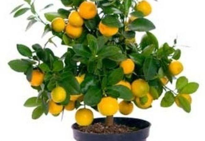 9 fructe pe care le poti creste in casa