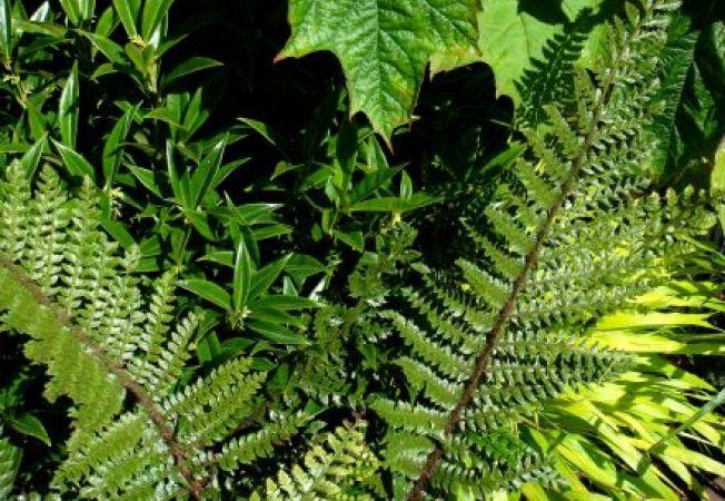 Studiu: plantele vorbesc si comunica intre ele prin sunete