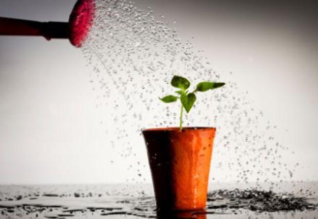 13 lucruri amuzante si interesante despre prietenele noastre, plantele