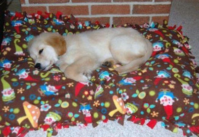 5 pasi pentru a dezobisnui cainele sa mai doarma in pat