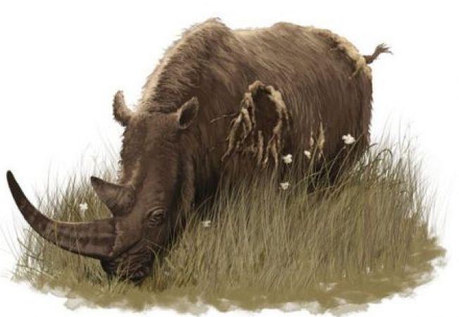 Au fost descoperite fosilele unui rinocer de acum 9 milioane de ani