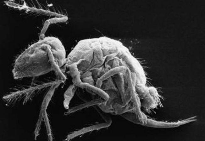 Creaturi bizare, asemanatoare insectelor, descoperite in pesterile din Spania