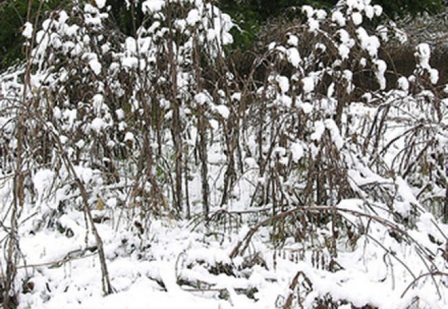 Elimina buruienile din gradina de iarna