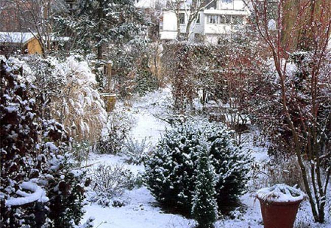 Ingrijirea copacilor si arbustilor din gradina in timpul iernii