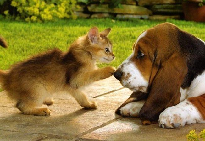 Bella, cel mai popular nume pentru animale de companie in 2012