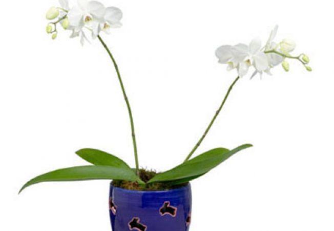 5 specii de orhidee usor de ingrijit