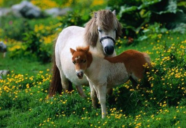 Sfaturi de la experti pentru alimentatia corecta a poneiului