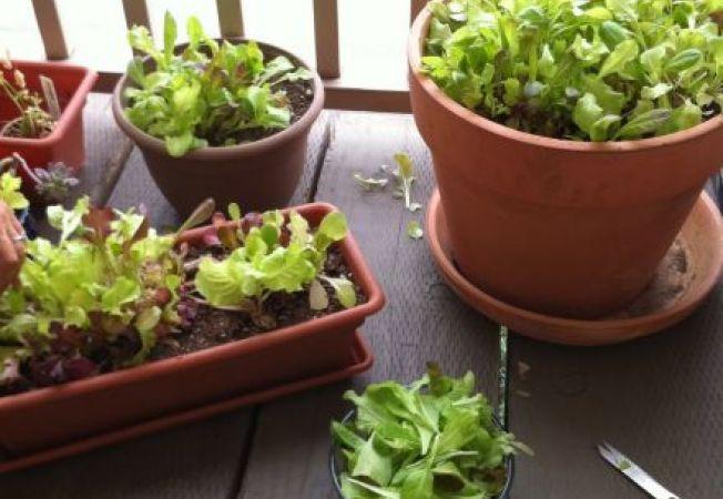 Gradina din balcon: ce legume poti cultiva in spatii restranse