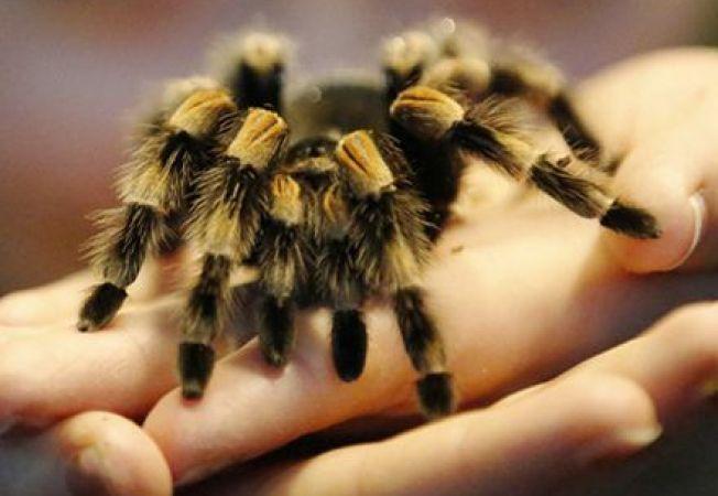 O specie noua de paianjen a fost botezata dupa Bono