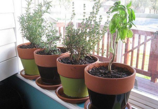 Curatenia de primavara pentru plantele de apartament