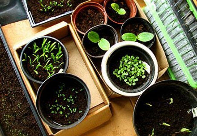 Ce seminte de plante poti cultiva in aceasta iarna
