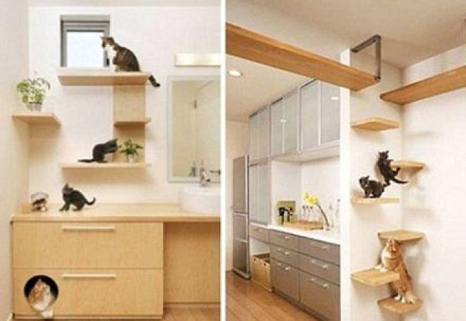 Solutii de design japoneze  pentru o casa cu pisici de companie