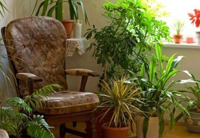 Care este lumina potrivita pentru plantele de apartament