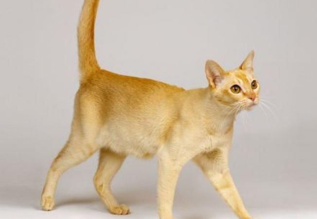 4 cauze posibile pentru scaderea in greutatea a pisicii