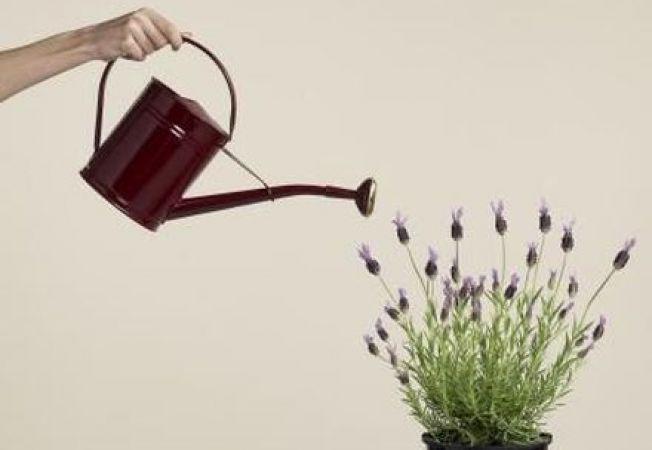 De cata apa au nevoie plantele de apartament