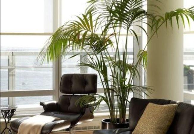 Plantele decorative prin frunze iti inveselesc casa in zilele mohorate de iarna