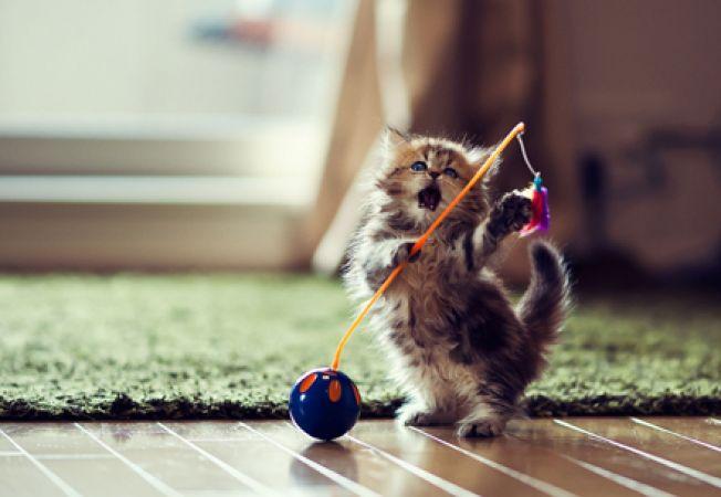 Pisica ta ramane singura in casa? Sfaturi utile sa o tii ocupata