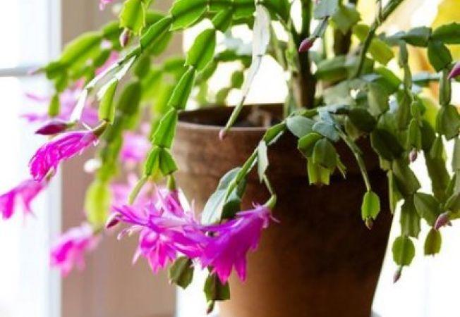 5 moduri prin care sa iti faci plantele fericite in sezonul rece