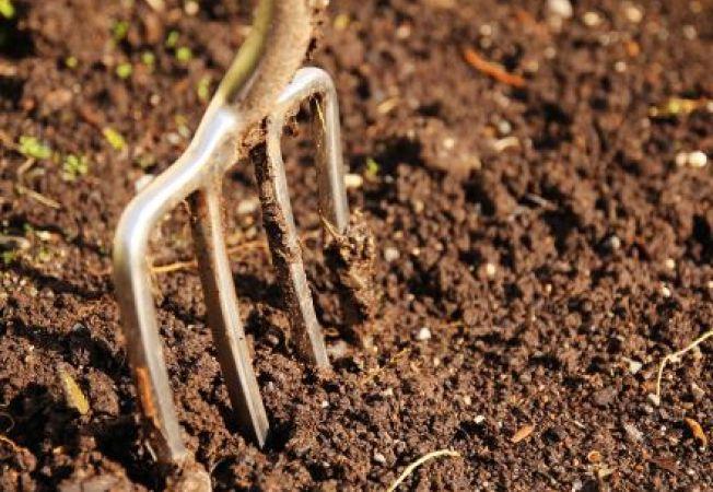 Cum sa pregatesti solul pentru plantele de primavara