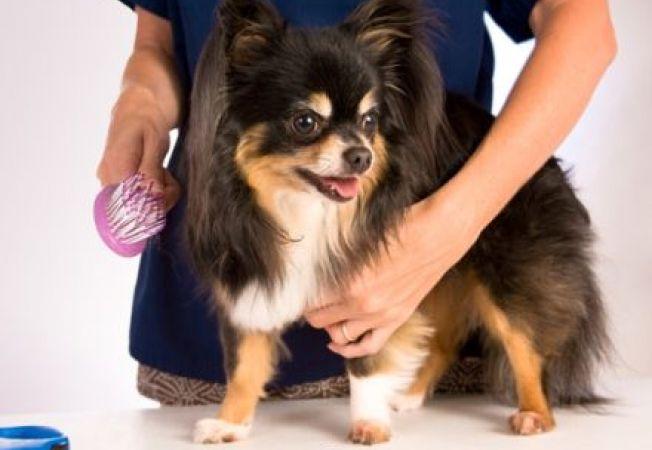 De ce este important sa apelezi la serviciile unui salon canin