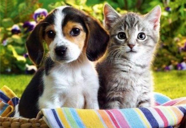 Rase foarte inteligente de caini si pisici