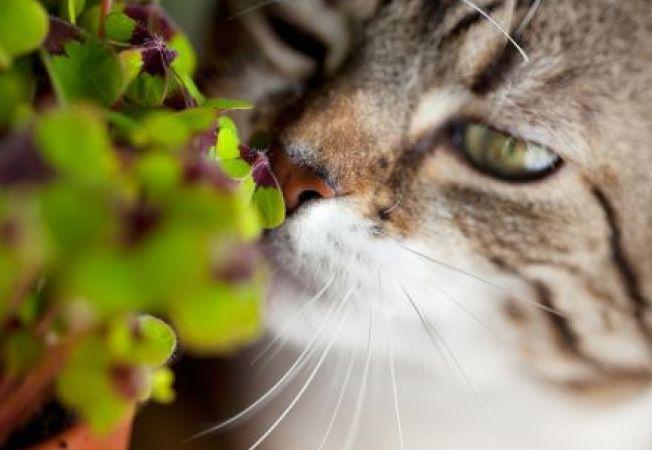 4 plante de gradina cu efecte benefice pentru pisici