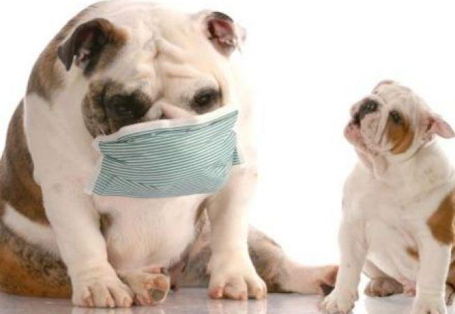 Ce trebuie sa stii despre gripa canina