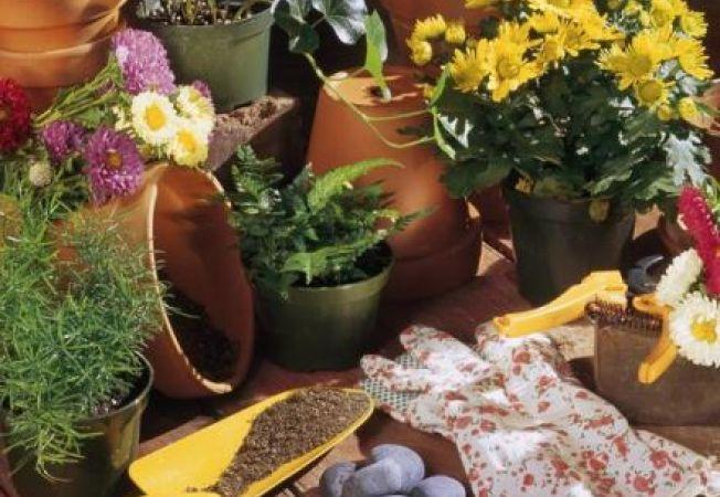 Ce poti face pentru a indeparta mirosul urat al pamantului plantelor de apartament