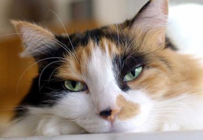 Lucruri inedite despre anatomia pisicii