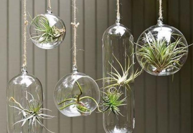 Plante aerofite (aeriene): cresc fara sol si necesita ingrijire minima