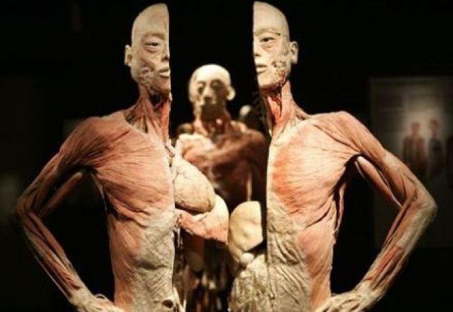 Expozitie de trupuri umane la Muzeul Antipa
