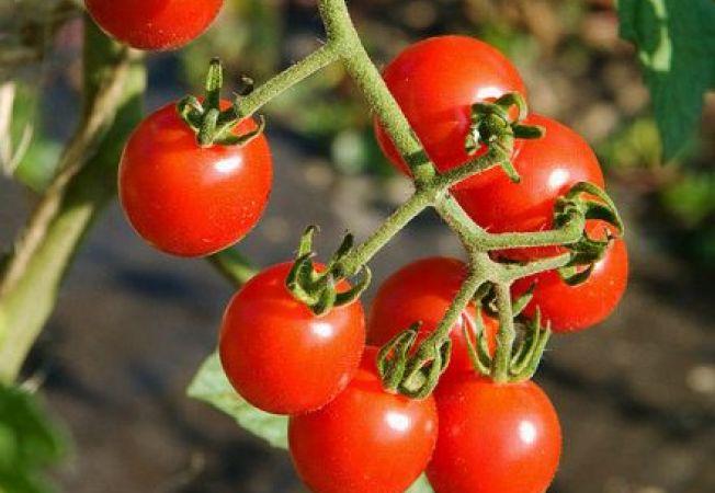 Noi soiuri de fructe si legume pentru 2013