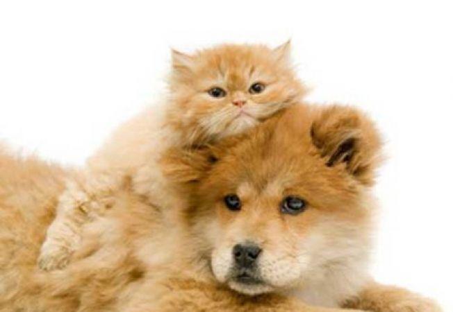 6 motive pentru a-ti steriliza animalul de companie