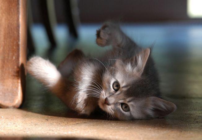 Prima luna a pisicii in casa noua - ce trebuie sa faci