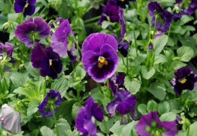 Cumpara plante sanatoase 4 sfaturi utile for Plante utile