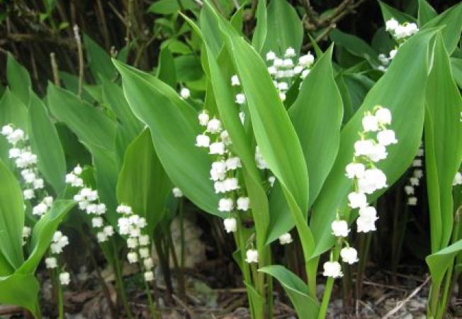 Peluza de primavara: tipuri alternative de plante pentru gazon