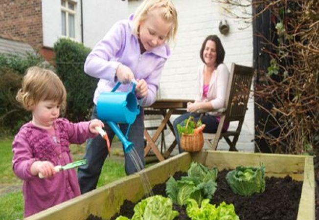 5 culturi gustoase pe care le poti planta in containere