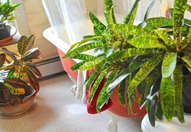 Dieta plantelor tale de apartament: 3 aspecte esentiale