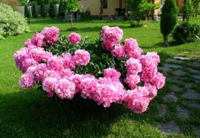 6 flori usor de cultivat de gradinarii incepatori
