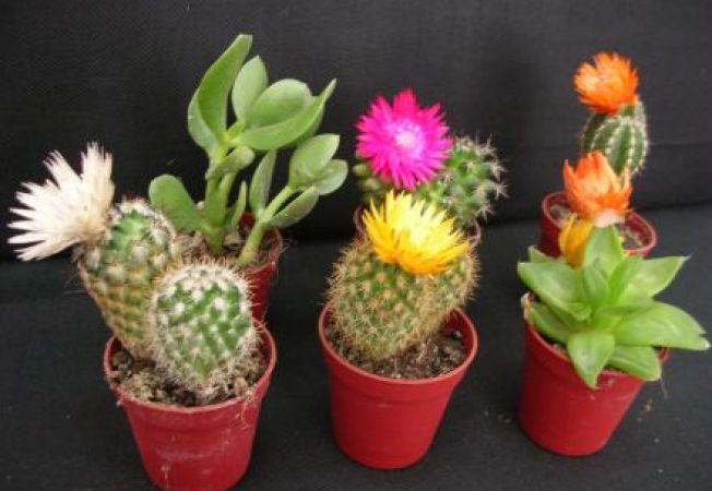 4 plante decorative in ghiveci potrivite pentru gradina Plante decorative